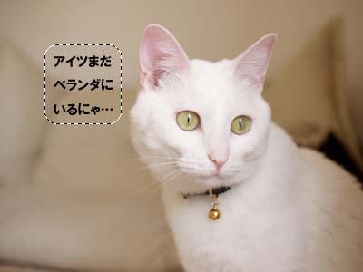 cat1908
