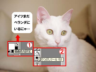 cat1909