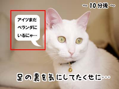 cat1911