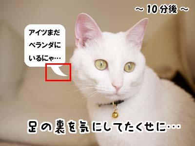 cat1913