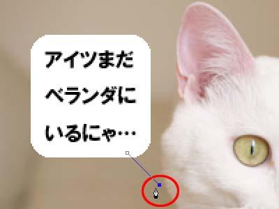 cat1916