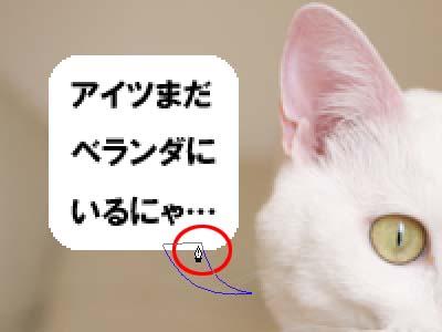 cat1921