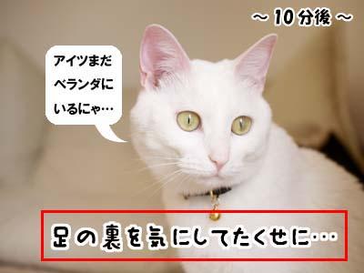 cat1927