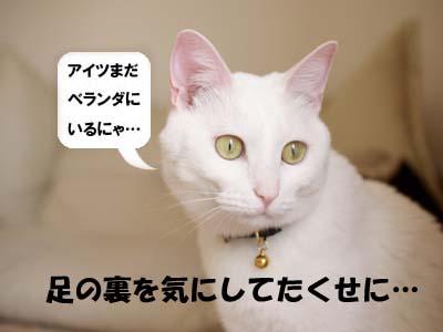 cat1930