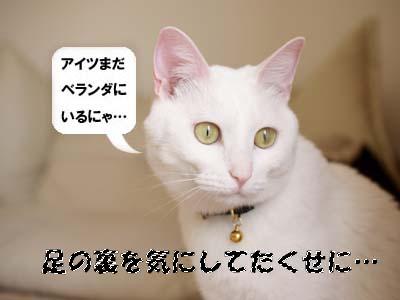 cat1935