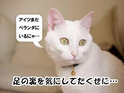cat1939