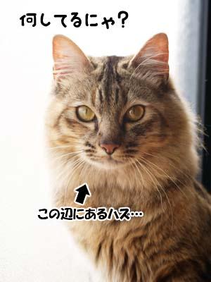 cat1948