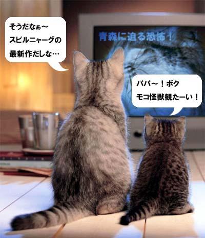 cat1951