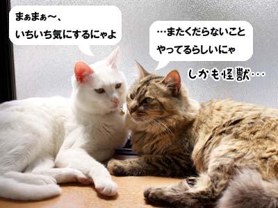 cat1953