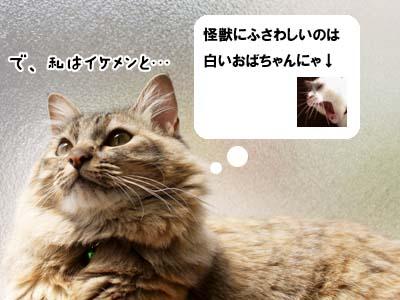 cat1954