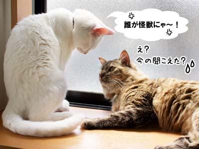 cat1955