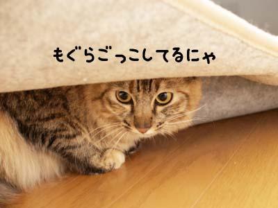 cat1957