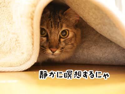 cat1958