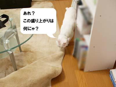 cat1959