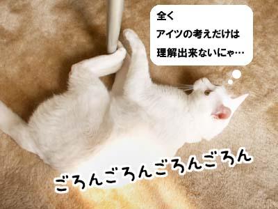 cat1960