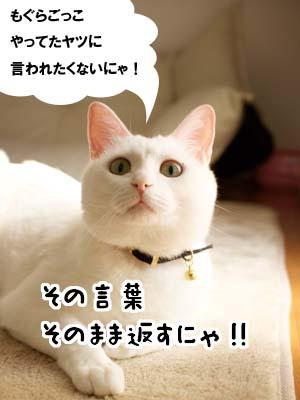 cat1962