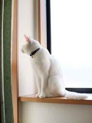 cat1963