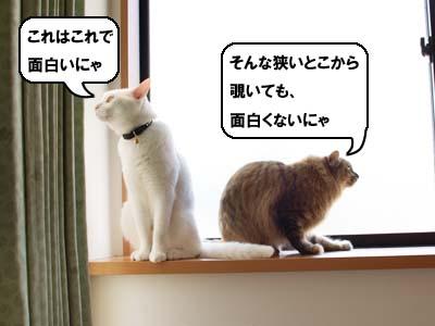 cat1964