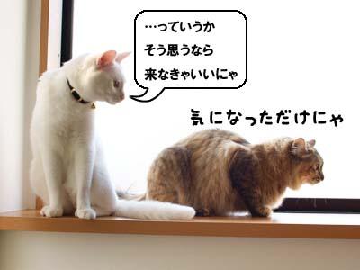 cat1965