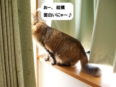 cat1966