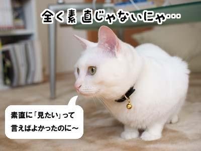 cat1967