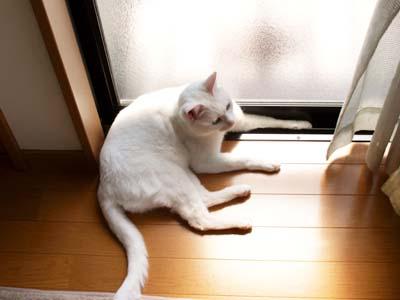 cat1968