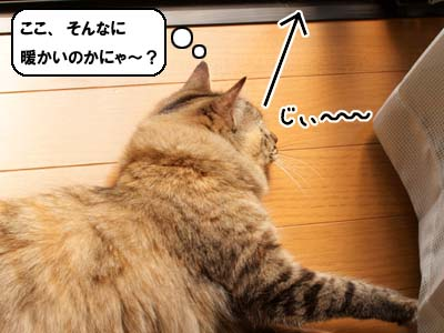 cat1972