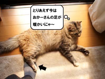 cat1973