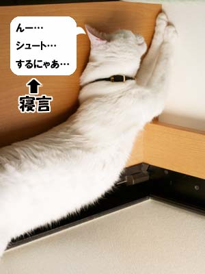 cat1989