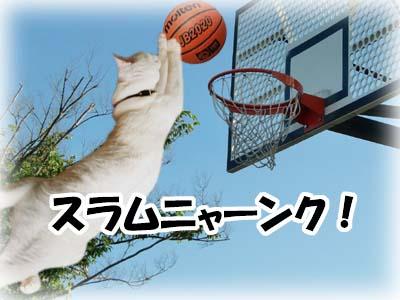 cat1990