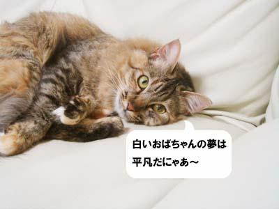 cat1991