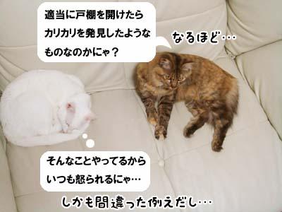 cat1998