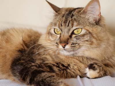 cat1999