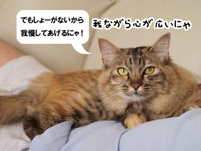 cat2002