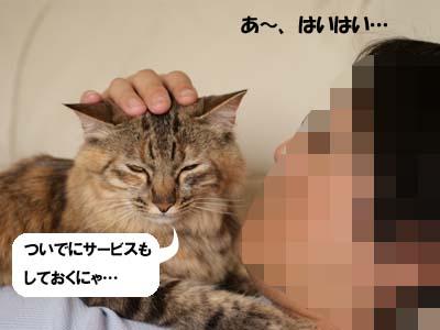 cat2003