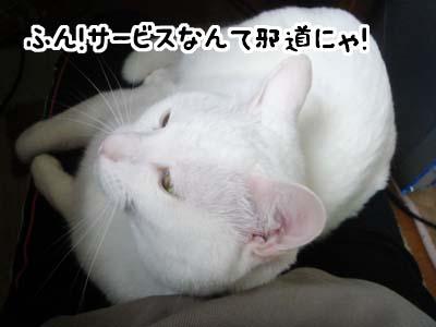 cat2004