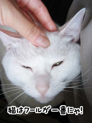 cat2005