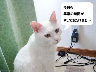 cat2006