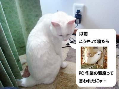 cat2007