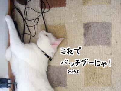 cat2010