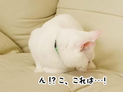 cat2014