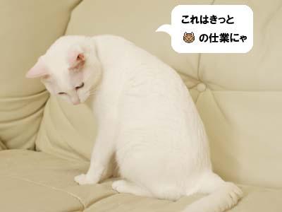 cat2016