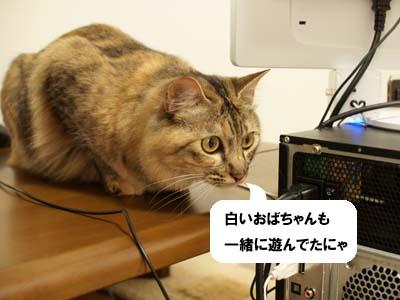 cat2017