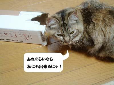cat2019