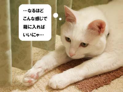 cat2020
