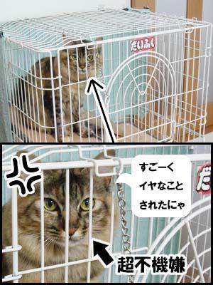 cat2025