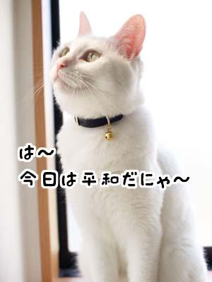 cat2026
