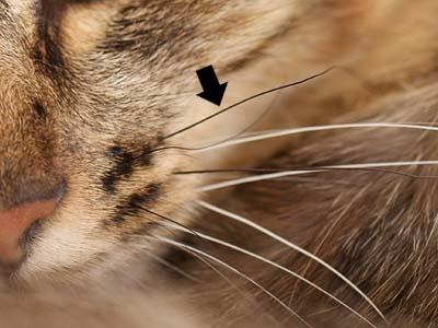 cat2028