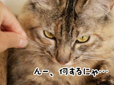 cat2029