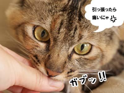 cat2030